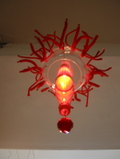 Mduse_corail_rouge_2